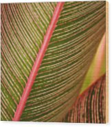 Variegated Ti-leaf 1 Wood Print by Ron Dahlquist - Printscapes