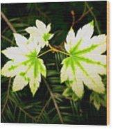 Variegated Vine Maple Wood Print