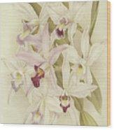 Varieties Of Laelia Anceps Wood Print