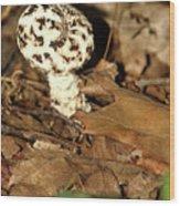 Varigated Mushroom Wood Print