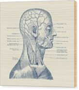 Vascular And Muscular System - Vintage Anatomy Print Wood Print