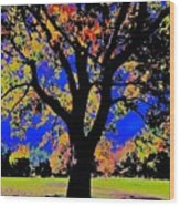 Oak Autumn Vasona Wood Print