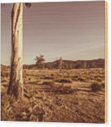 Vast Pastoral Australian Countryside  Wood Print