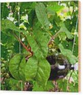 Vegetable Growing In Used Water Bottle 10 Wood Print