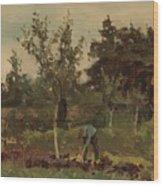 Vegetable, Willem Witsen, 1885 - 1922 Wood Print