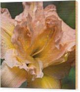 Veiled Mother Of Ivory Iris Wood Print