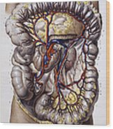 Veins And Arteries, 19th Century Wood Print