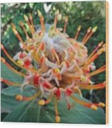 Veldfire Protea Wood Print