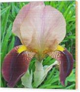 Velvet Iris Wood Print