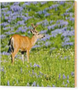 Velvet On Lupine Wood Print