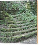 Venerable Ascent Wood Print