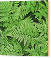 Verdant Ferns Wood Print