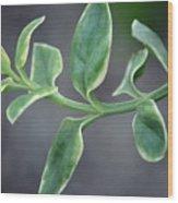 Verde Wood Print