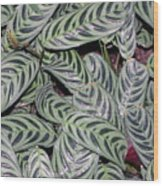 Verigated Green Leaves Wood Print