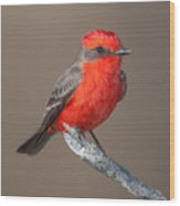Vermilion Flycatcher Wood Print by Clarence Holmes