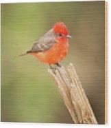 Vermilion Flycatcher Facing Camera On Tree Stump Wood Print