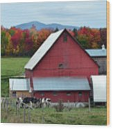 Vermont Cows At The Barn Wood Print