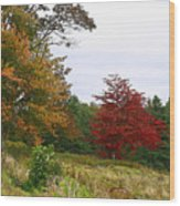 Vermont Roadside Color Wood Print