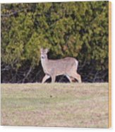 Vermont White-tailed Deer  Wood Print