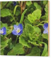 Veronica Speedwell Wood Print