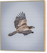 Vertical Eagle Triptych Wood Print