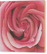 Vertigo Rose Wood Print