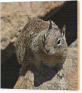 Very Cute Face Of A Wild Squirrel In California Wood Print