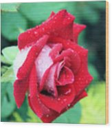 Very Dewy Rose Wood Print