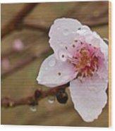 Very Early Peach Blooms Wood Print