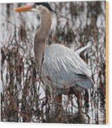 Very Handsome Heron  2845 Wood Print