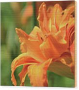 Very Pretty Double Orange Daylily Flowering In A Garden Wood Print