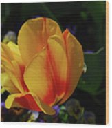 Very Pretty Yellow And Red Tulip Flower Blossom Wood Print