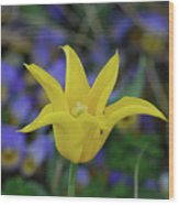 Very Pretty Yellow Tulip With Spikey Petals Wood Print