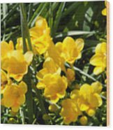 Very Sunny Yellow Flowers Wood Print