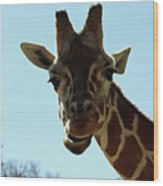 Very Tall Giraffe Wood Print