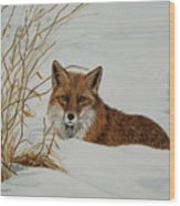 Vexed Vixen - Red Fox Wood Print