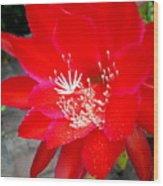 Vibrant Cacti Wood Print