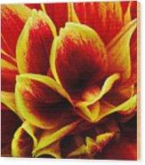 Vibrant Dahlia Petals Wood Print