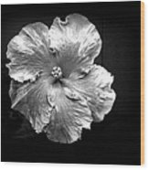 Vibrant Flower Series 3 Wood Print by Jen White
