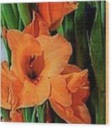 Vibrant Gladiolus Wood Print