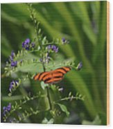 Vibrant Oak Tiger Butterfly Surrounded By Blue Flowers Wood Print