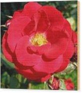 Vibrant Red Rose Wood Print