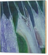 Vibrant Still Life Paintings - Wash Day - Virgilla Art Wood Print