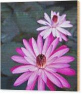 Vibrant Waterlilies Wood Print by Dana Edmunds - Printscapes