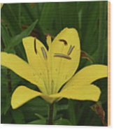 Vibrant Yellow Lily Thriving In The Spring Wood Print
