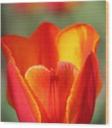 Vibrantly Yours Wood Print