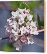 Viburnum Bloom Wood Print