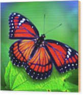 Viceroy Perch Wood Print