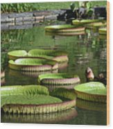 Victoria Amazonica Giant Lily Pads  Wood Print