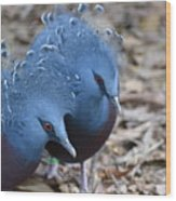 Victoria Crowned Pigeon 5 Wood Print